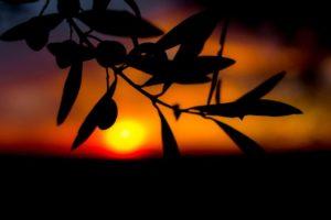 Growing-At-Night-1200x666