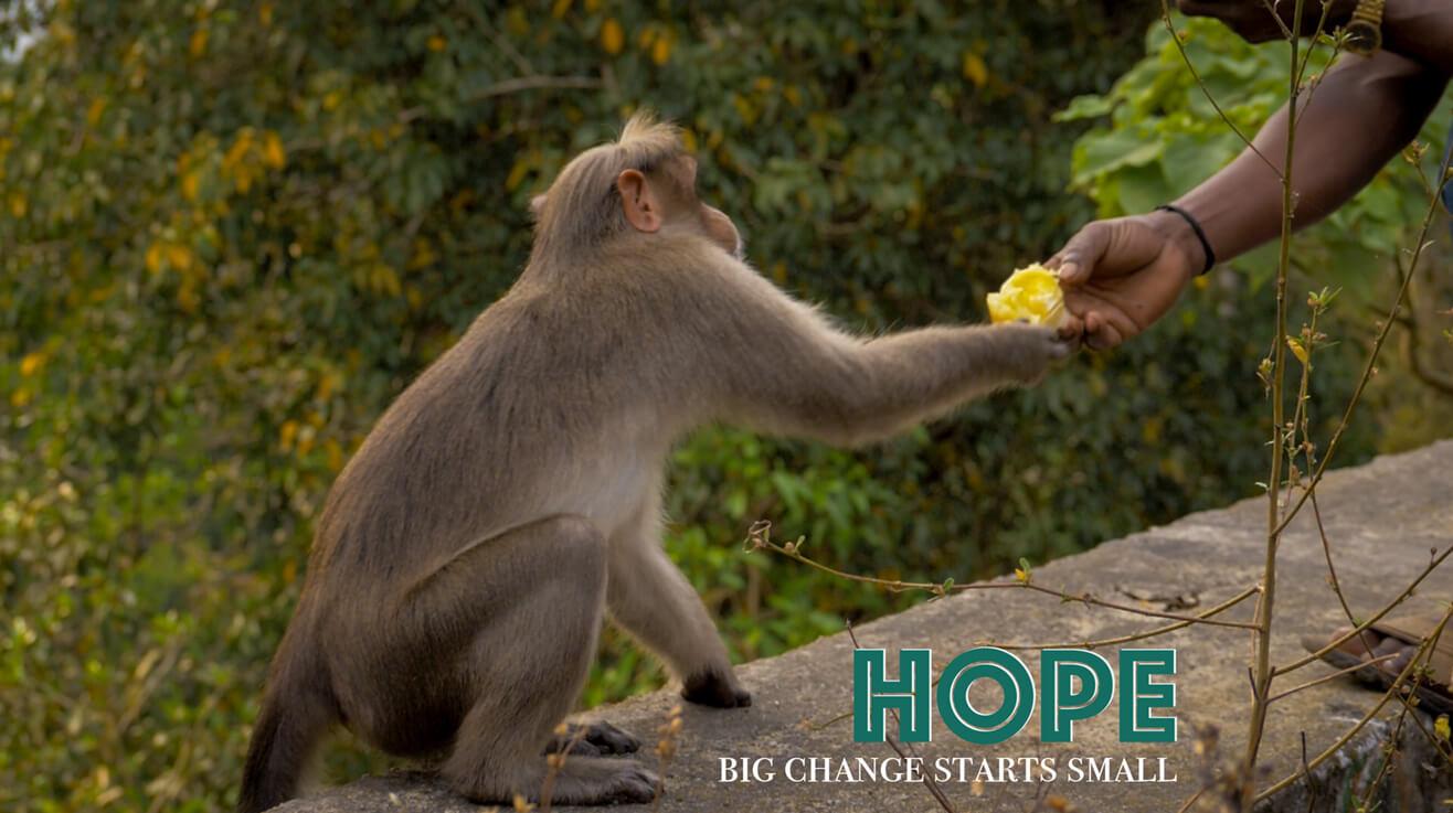 Monkey-Sharing-Food