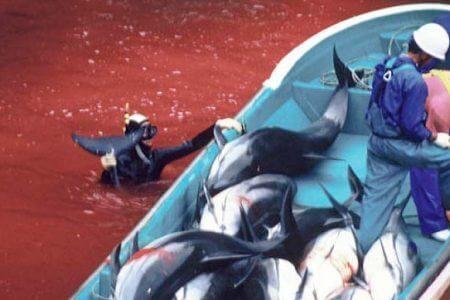 Sea-Shepherd-Vortrags-jpegs-81-450x300